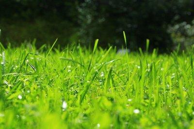 Какую газонную траву выбрать для участка