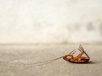 4 экологичных способа избавиться от тараканов