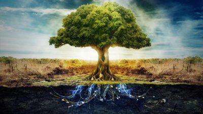 Необычные возможности деревьев