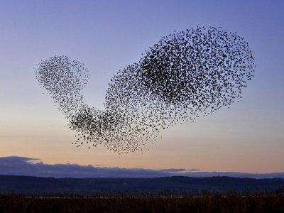 Существует ли коллективный разум населения планеты?