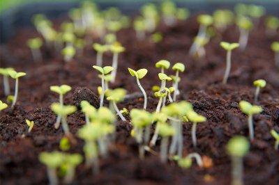 Посадка семян: 5 способов ускорить прорастание