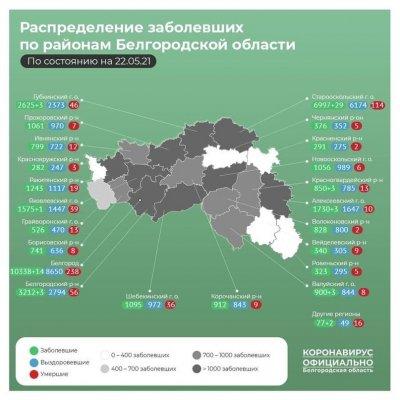 Ситуация с эффективностью вакцинации в Белгородской области