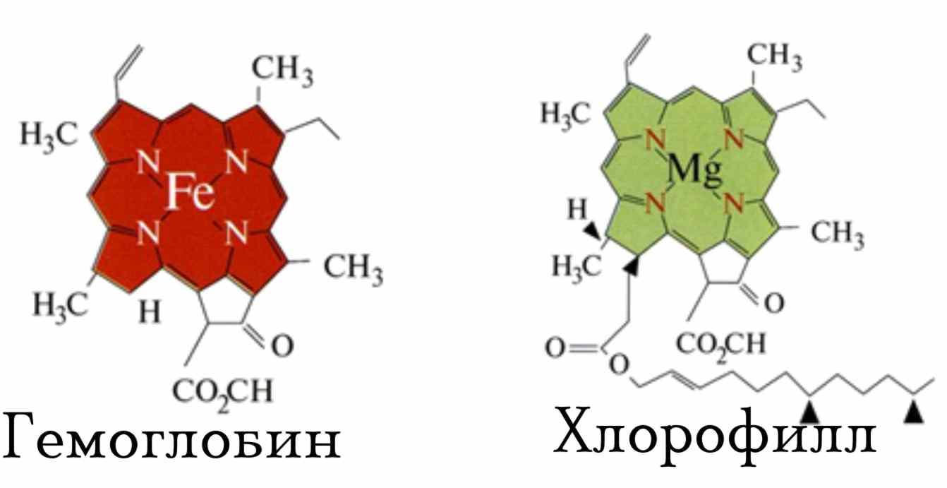 Обратите внимание, что молекулы Хлорофилла и Гемоглобина отличаются только одним атомом в центре, в Хлорофилле...