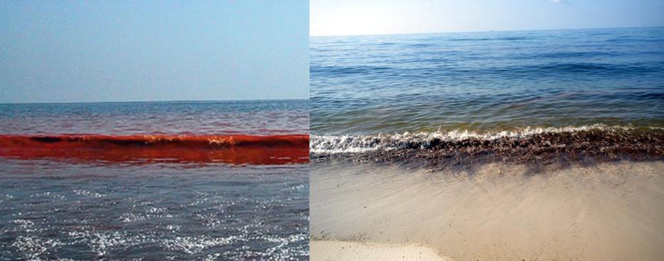 Метастазы Мексиканского залива. Часть 7