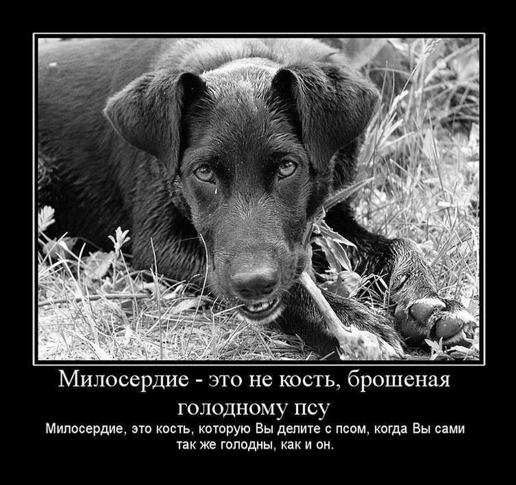 http://via-midgard.info/uploads/posts/2011-04/1302398120_via-midgard.info-124.jpg