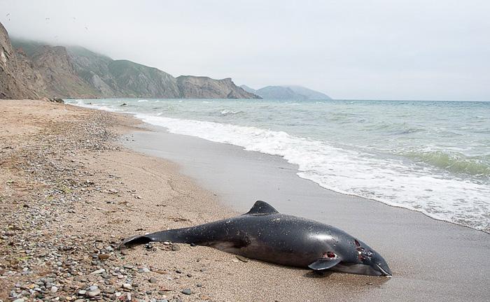 Смерть дельфинов под грифом «Секретно»