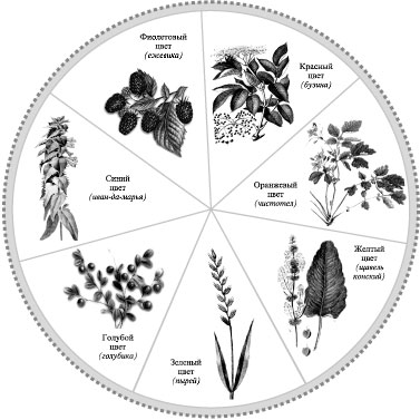 Неволина Н.А. (Светлена): Растения красители