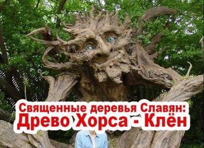Священные деревья Славян: Древо Хорса - Клён