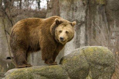 Медведи имели разум 40 млн лет назад. Георгий Сидоров (видео)
