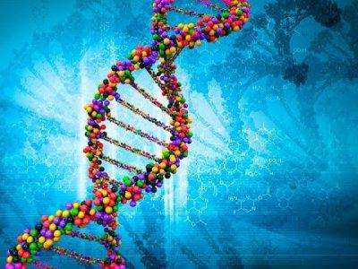 Мощная энергетика зависит от сильной генетики. Георгий Сидоров (видео)
