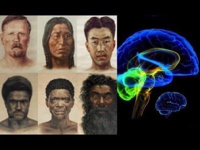 Разные расы - разный мозг (видео)