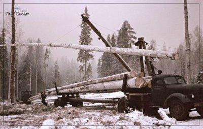 В СССР леса восстанавливали больше, чем вырубали