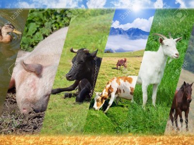 Почему нельзя думать о животных как о еде