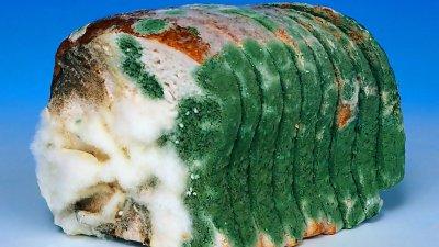 Хлеб как заговор против России. Заговор против нации