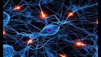 Как ртуть из вакцин влияет на нервные клетки человека