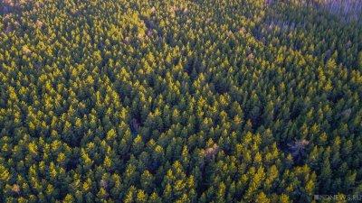 220 тысяч гектар свердловского леса отдадут под вырубку и продажу