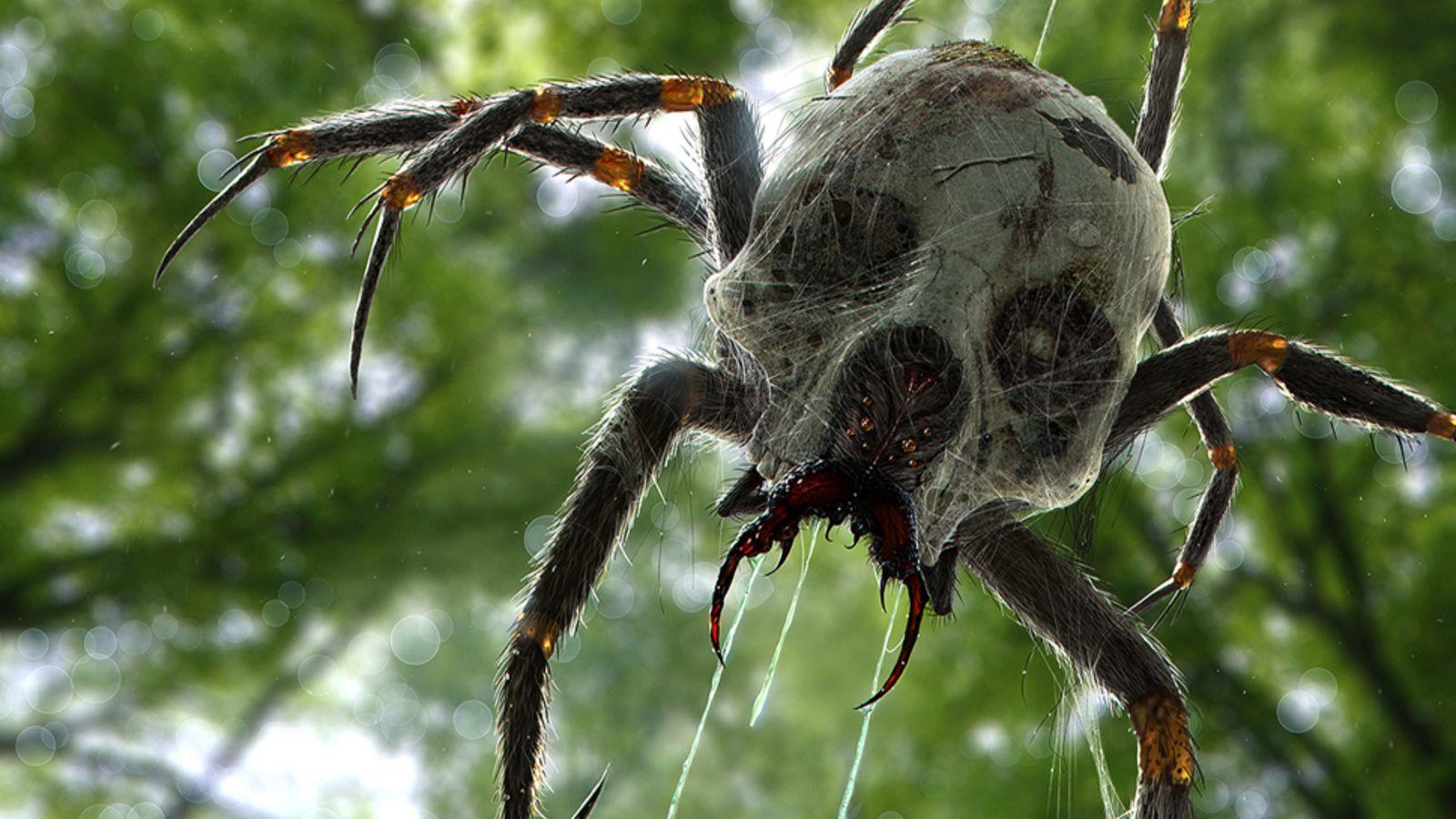 Фото австралийского паука по хорошему