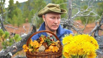 За сбор грибов, ягод и трав будут штрафовать?
